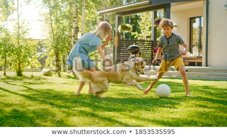 An adorable Golden retriever playing with a toy Stock photo © vauvau