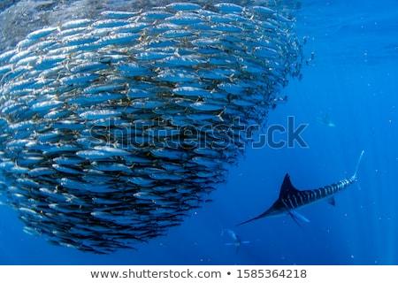 Fish bait Stock photo © hlehnerer