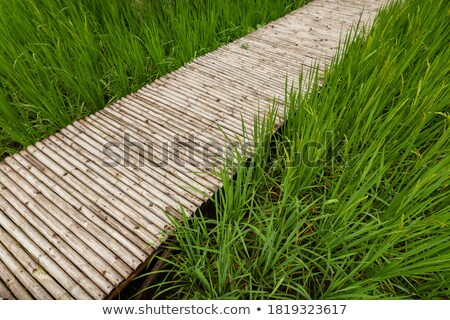Colorful Wooden Walkway and Pathway in the Green garden grass fields Stock photo © vichie81