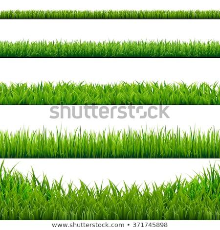 eco · establecer · hierba · aislado · blanco · naturaleza - foto stock © adamson