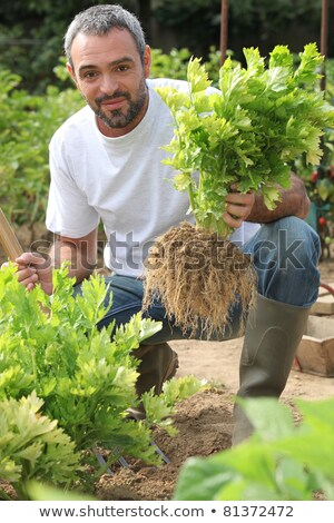 farmer crouching by lettuce patch stock photo © photography33