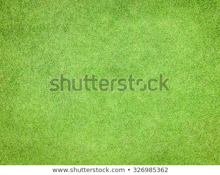 grass background top view Stock photo © Aliftin