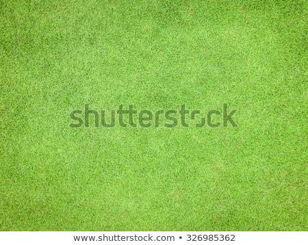 grass background top view stock photo © aliftin