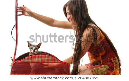 Hairless Cat in Carrier Stock photo © PetrMalyshev