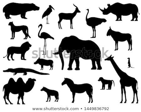 silhouette of rhino bird Stock photo © perysty