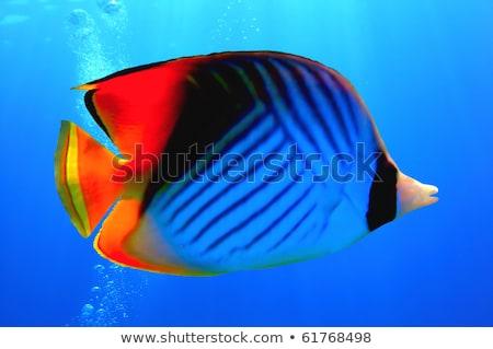 hal · trópusi · Vörös-tenger · tájkép · tenger · háttér - stock fotó © oleksandro