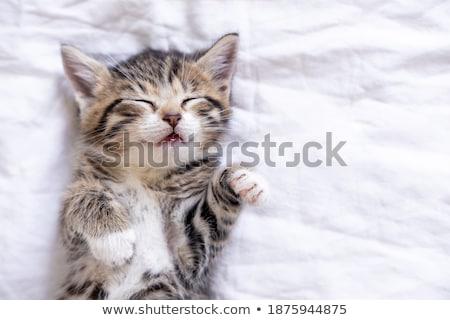 Adormecido bonitinho pequeno bebê vermelho branco Foto stock © juniart