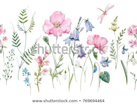 Gyengéd kert ibolya rózsaszín virág képeslap rózsaszín Stock fotó © vavlt