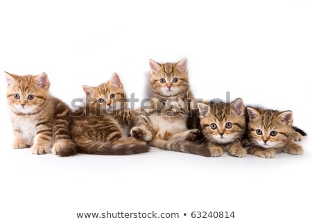 Lovable family of five Stock photo © get4net