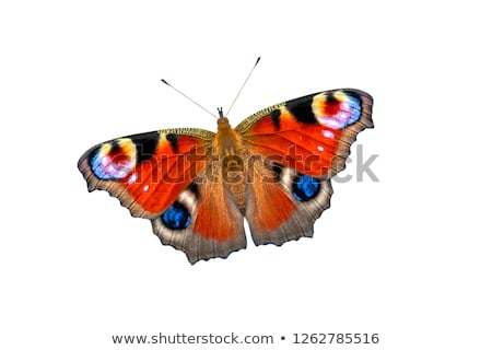 павлин бабочка цветок цветы весны глаза Сток-фото © tainasohlman