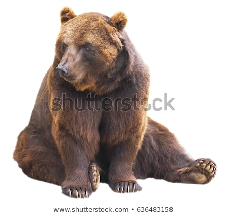 brown grizzly bear stands observing north american animal wildli stock photo © cboswell