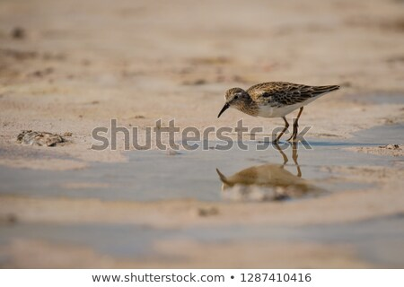 Yucatan Peninsula Beach Stock photo © javiercorrea15