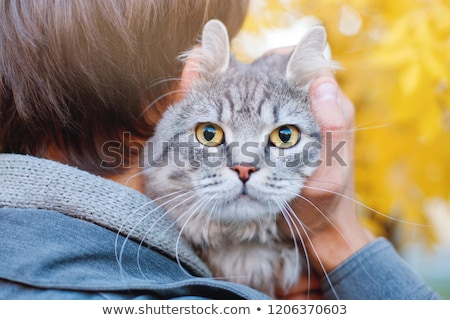 cute boy hugging with his cat  Stock photo © meinzahn