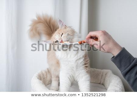 кошки · острый · зрение · глаза · волос · фон - Сток-фото © nelsonart