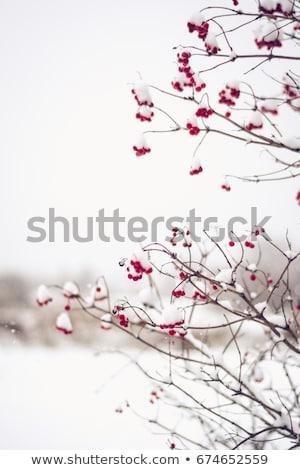 Egyedüli piros bogyók elmosódott tó Stock fotó © ondrej83