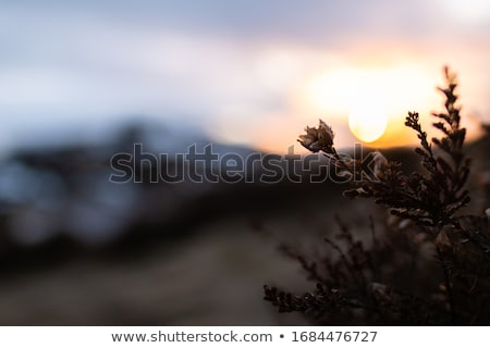 Dramatic Wild Moorlands Sunset Stock photo © solarseven