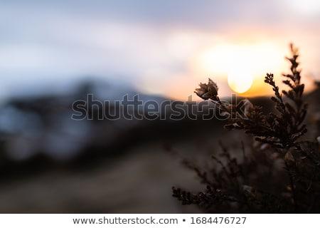 pôr · do · sol · belo · nuvens · viajar · diversão - foto stock © solarseven