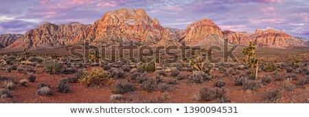 Hiver désert Nevada neige couvert arbre Photo stock © emattil
