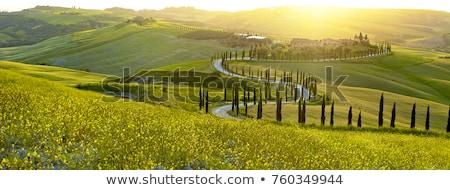 Naplemente tájkép Toszkána kép Olaszország fa Stock fotó © w20er