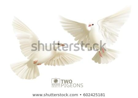 Stock fotó: Galambfélék · vektor · kép · esküvő · dizájnok · szeretet
