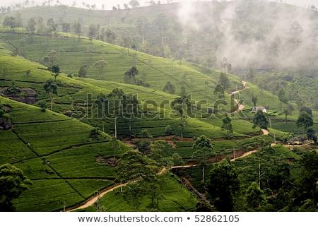 Zöld Sri Lanka köd munka fák hegy Stock fotó © meinzahn