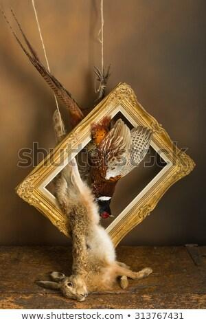 Natürmort ahşap tabanca ölüm hayvanlar ölü Stok fotoğraf © phbcz