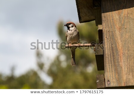 Stock photo: birdhouse in autumn