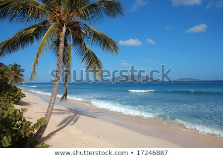 Trópusi fehér homok szűz tengerpart pálmafák trópusi tengerpart Stock fotó © H2O