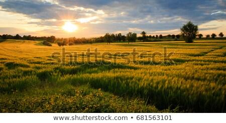 Nieograniczony dziedzinie niebo wiosną charakter tle Zdjęcia stock © g215
