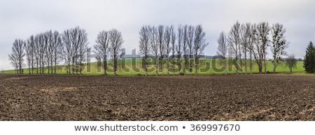leaveless trees in winter inrural area  Stock photo © meinzahn