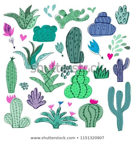 Rajz kaktusz egyszerűsített mexikói izolált fehér Stock fotó © sharpner