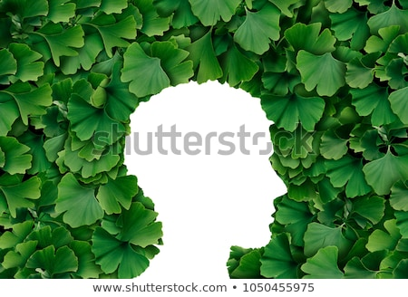 Ginkgo Biloba Human Stock photo © Lightsource