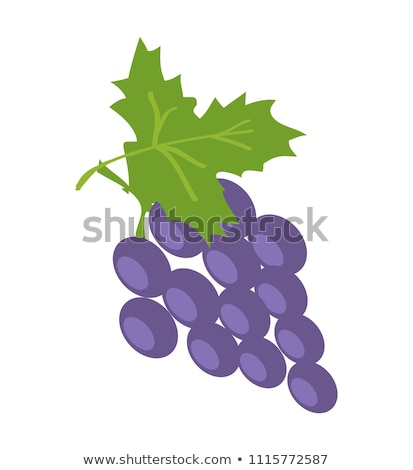 brunch of lilac grape color vector illustration stock photo © robuart