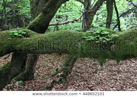 twisted moss detail Stock photo © prill