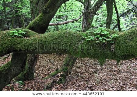 Mech szczegół piasku holenderski charakter zielone Zdjęcia stock © prill