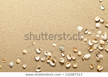 Foto stock: Praia · pormenor · praia · deserto · planta