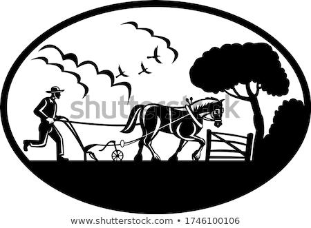 農家 馬 実例 を実行して 男 自然 ストックフォト © colematt