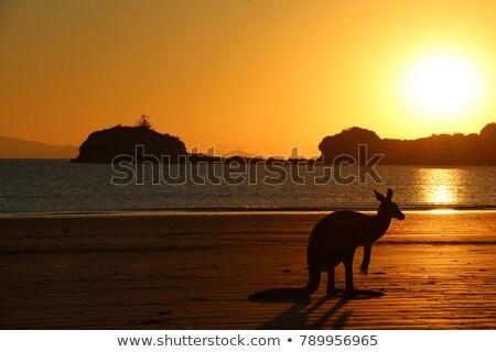 Australian cangur frumos îndepărtat plajă Imagine de stoc © lovleah