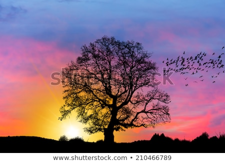 Rural sunset and tree silhouette Stock photo © lovleah