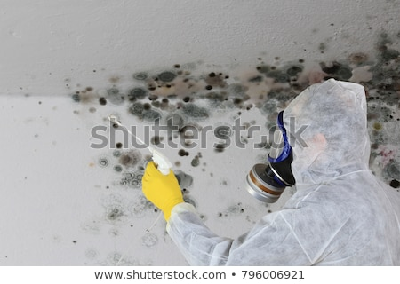 dampness on old house structure Stock photo © taviphoto