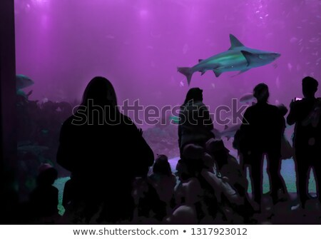 Stock photo: Oceanarium Underwater World. One Person Watching Shark in a Oceanarium. Beauty of the Lisbon