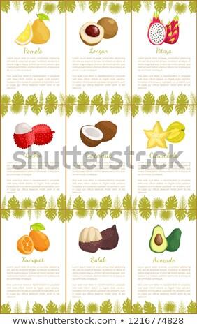 Abacate conjunto pôsteres vetor texto amostra Foto stock © robuart