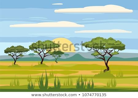 Savane nature scène illustration paysage design Photo stock © bluering