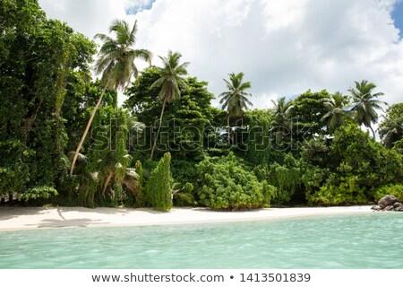 Spiaggia isola Seychelles foglie di palma cielo natura Foto d'archivio © AndreyPopov