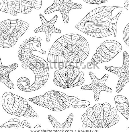 Vetor colorido conchas ornamento conchas Foto stock © user_10144511