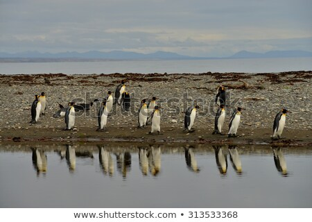 Olvad jéghegy király pingvin vektor izometrikus Stock fotó © leedsn