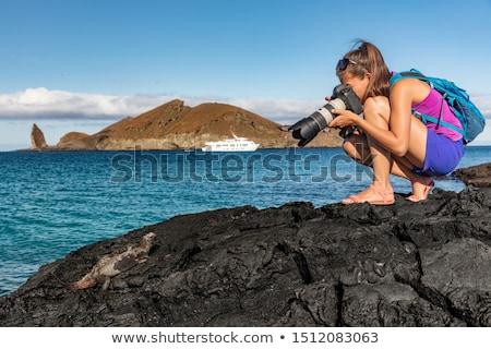 Turísticos marinos iguana Santiago isla Foto stock © Maridav