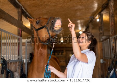 Young cheerful sporty woman trying to touch nose of brown purebred racehorse Stock photo © pressmaster