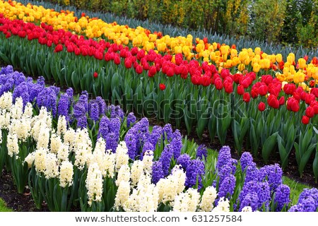 Virágágy kilátás kert Hollandia tavasz természet Stock fotó © borisb17