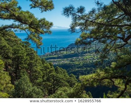 Campos montanhas canárias cultivado vale Foto stock © vapi